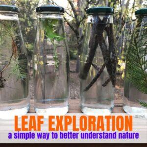 Leaf Sort – An Indoor Leaf Activity for Preschoolers