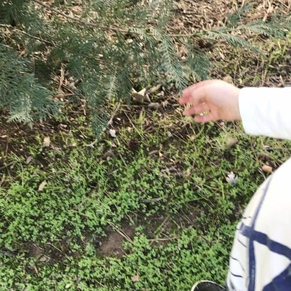 leaf activities for preschoolers