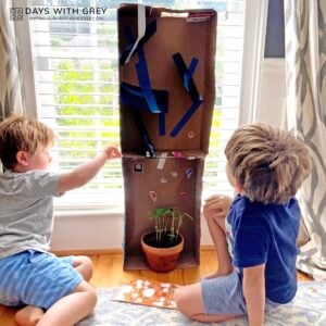 Plant Maze: Science Lessons for Kindergarten (and beyond!)